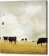 How Now Black Cow Canvas Print
