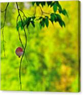 How To Catch A Tree Canvas Print