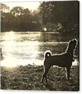 Howl At The Sun Canvas Print