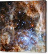 Hubble Finds Massive Stars Canvas Print