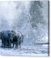 Huddled For Warmth Canvas Print