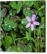 Huge Beauty In A Small Wildflower Canvas Print