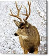 Huge Buck Deer In The Snowy Woods Canvas Print