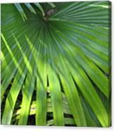 Huge Palm Leaf Canvas Print