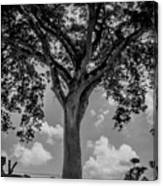 Huge Tree 12 Canvas Print