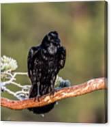 Huginn The Raven Canvas Print