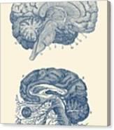 Human Brain - Central Nervous System - Vintage Anatomy Print Canvas Print
