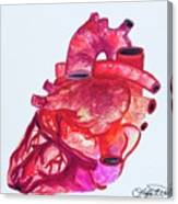 Human Heart Pa Canvas Print