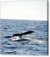 Humback Whale Canvas Print