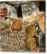 Humboldt Penguin 4 Canvas Print