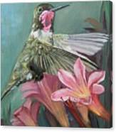 Humming Bird Anna Canvas Print