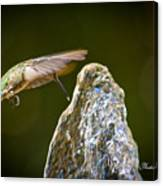Humming Bird Hovering Over Water Fountain Getting A Drink Canvas Print