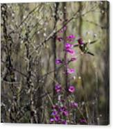 Humming Bird In Nature Canvas Print