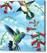 Humming Birds Canvas Print