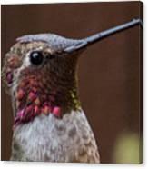Hummingbird 16 Canvas Print