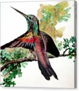 Hummingbird 5 Canvas Print