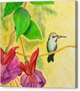 Hummingbird Amongst The Fuchsia Canvas Print