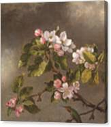 Hummingbird And Apple Blossoms Canvas Print