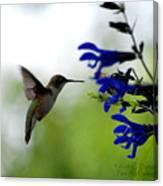 Hummingbird And Blue Flowers Canvas Print