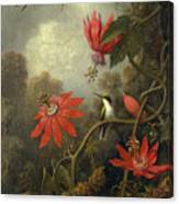 Hummingbird And Passionflowers Canvas Print