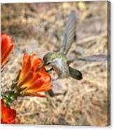 Hummingbird And The Hedgehog  Canvas Print