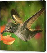 Hummingbird And The Monkey Flowers Canvas Print