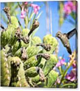 Hummingbird And The Saguaro  Canvas Print