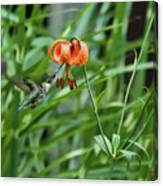 Hummingbird And Tiger Lilly Canvas Print
