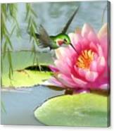 Hummingbird And Water Lily Canvas Print