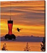 Hummingbird At Sunset. Canvas Print