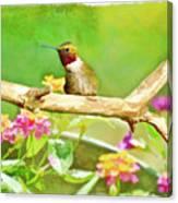 Hummingbird Attitude - Digital Paint 2 Canvas Print