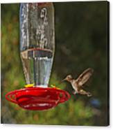 Hummingbird Coming For Dinner Canvas Print
