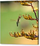 Hummingbird Drinking Nectar Canvas Print