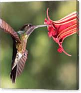 Hummingbird Enjoying Beautiful Flower Canvas Print