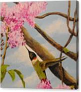 Hummingbird Feeding On Lilac Canvas Print