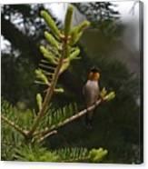 Hummingbird Flashing Canvas Print