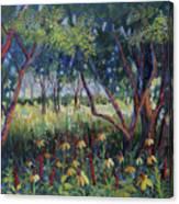 Hummingbird Gardens Canvas Print