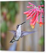 Hummingbird Happiness 2 Canvas Print