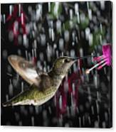 Hummingbird Hovering In Rain With Splash Canvas Print