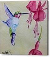 Hummingbird I Canvas Print