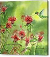 Hummingbird In Beebalm Canvas Print
