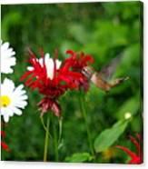 Hummingbird In Flowers Canvas Print