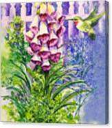 Hummingbird In Foxgloves  Canvas Print