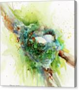 Hummingbird Nest Canvas Print