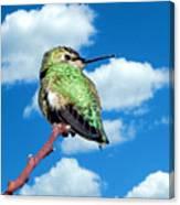Hummingbird On High Canvas Print