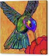 Hummingbird On Yellow Canvas Print