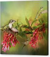 Hummingbird Paradise Canvas Print