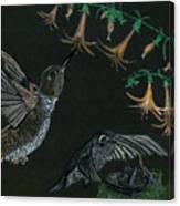 Hummingbird Parents Canvas Print