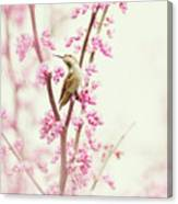 Hummingbird Perched Among Pink Blossoms Canvas Print