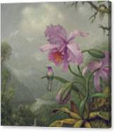 Hummingbird Perched On An Orchid Plant Canvas Print